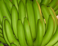 Photograph of Bananas